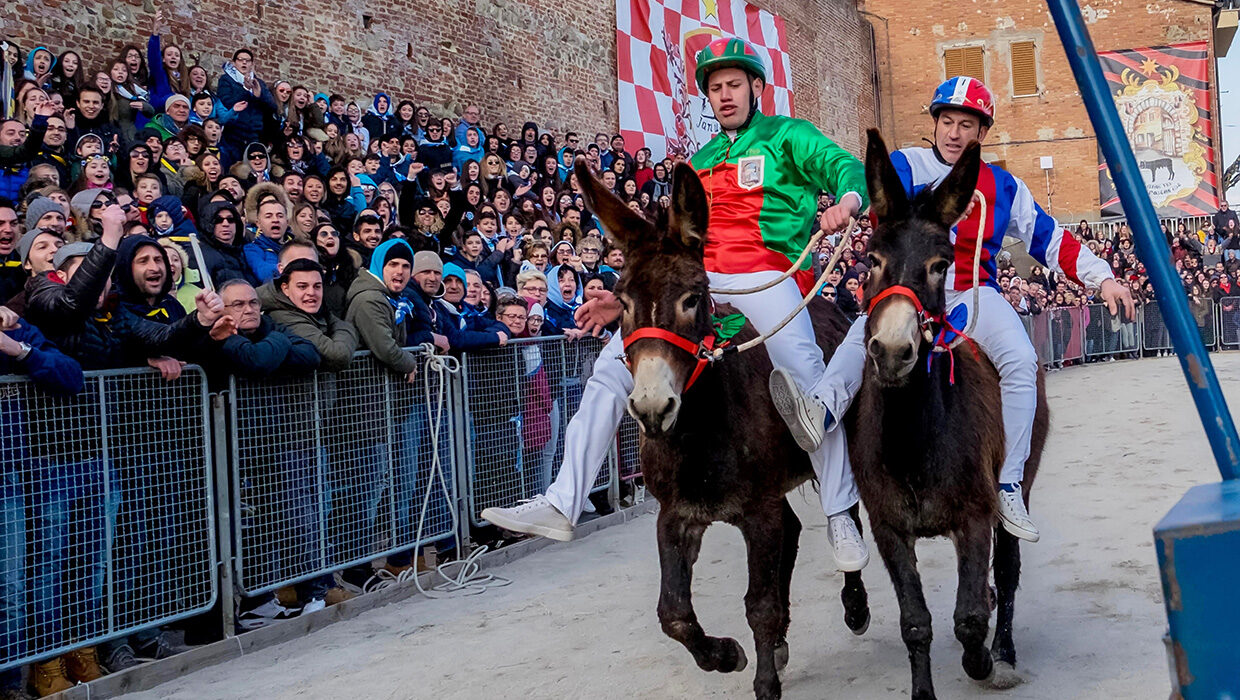 Jockeying for position: The Palio dei Somari, a race between disobedient donkeys, is full of funny moments. Photo: Stefano Mazzola/Awakening/Alamy